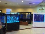 中山水族鱼缸-哪里有鱼缸-珠海市香洲龙鱼世家水族馆