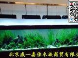 专业上门承接鱼缸换水鱼缸清理清洗鱼缸维护养护
