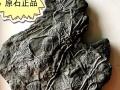 大自然的宝贝,天然海百合化石 贵州龙化石