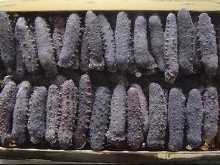 梅州高价回收海参