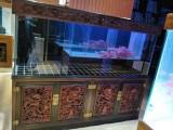 出售各种观赏鱼