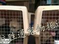 国际宠物托运,宠物出国,宠物移民,宠物空运
