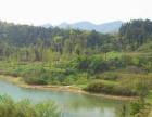 衢州市常山县337亩林地低价转让