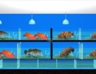 专业承建海鲜池 鱼池工程