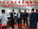 中山鲁西黄牛养殖场