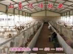 济宁夏洛莱羊养羊场山东亿顺牧业