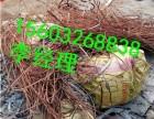 大同废电缆 回收广灵废铜回收电缆