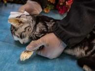 宠物 宠物骨灰盒 宠物墓地 宠物尸体怎么处理