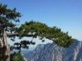 【陕西中旅】华山一日游,每人320元含门票、车费