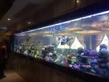 广州专业海鲜池定做公司 广州海鲜池制冷设备安装