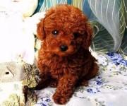 青岛宠物领养中心 大量狗狗免费送人