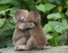 宠物猴多少钱一只 在哪里有宠物猴子卖 小猴子多少钱一只
