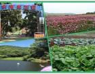 全新深圳农家乐乐湖生态园团建活动野炊特色休闲项目一日游攻略