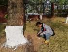 东莞白蚁防治 龙科技术精湛 彻底灭绝 快速上门