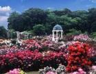 三亚情人节去哪里 三亚亚龙湾国际玫瑰谷