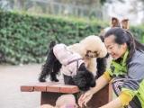 学生创业团队承接遛狗业务