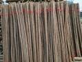 批发 零售 回收各种新旧园林绿化支撑,杉木杆,竹竿,防腐木