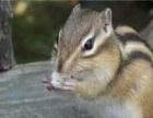 松鼠刺猬龙猫雪貂等等