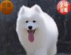 寻找中型犬,应有尽有颜色全健康纯种