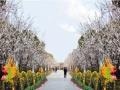 新乡五龙山游乐园免费预订送菊花展游玩