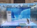 海洋生物观赏水母展租赁公司新颖海洋展活动布置