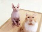 猫宝宝找麻麻