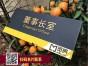 深圳南山公司标识广告制作