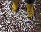 天津哪卖鹅卵石黑色鹅卵石白色鹅卵石