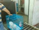 银川航空急件全国当日达 宠物物流 高价值货物空运