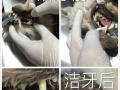汉阳宠物医院