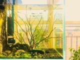 北京通州鱼缸维护 鱼缸订制 造景 鱼缸管家