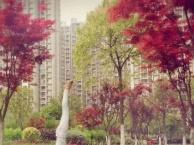 武汉那里有舞蹈艺考私教的舞蹈艺考班 艺术特长生私教