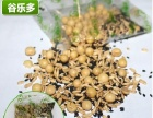 谷乐多现磨豆浆加盟 北京五谷豆浆加盟