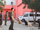 上海训犬基地哪里有-派多格寄训中心-训犬帮