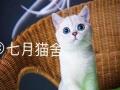 CFA猫舍用品活体猫