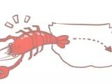 朱大龙虾 小龙虾的深入了解