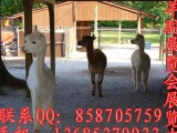 山东珍禽养殖销售顺龙牛羊驴繁育养殖场
