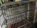出售不锈钢狗笼一个