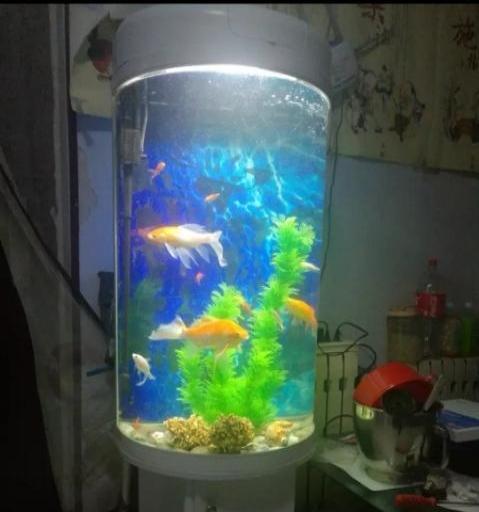 便宜出售鱼缸,急急急~~~