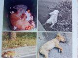上海南站接收寵物的地方 上海寵物無害化處理中心