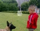 宠物训练 3000元
