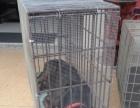 厦门宠物托运 全国连锁70家网点 安全可靠