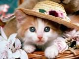 蕪湖支持視頻看貓 全國免費送貨上門
