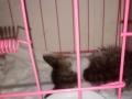 粉色笼99999新,因宠物给别人养。所以出售。羊奶粉益生菌