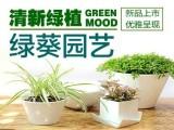 上海绿植盆栽办公室花卉植物租赁植物租摆养护开业乔迁鲜花花篮