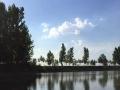 德州禹城120亩纯天然野生鱼垂钓园,生态天然垂钓