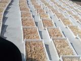 大量供應黃花菜,柑桔