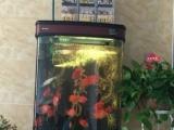 鱼缸带强大过滤系统出售