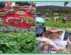 假期周末聚会推荐深圳宝安周边大型农家乐吃喝玩乐一日游