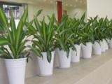 专业做绿植租赁,室内外绿化及盆器定制的一家专业园艺